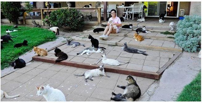 Wanita ini rela jadi gelandangan akibat memelihara  ribu kucing